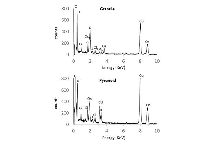 Correlative microscopy for elemental analysis by NanoSIMS