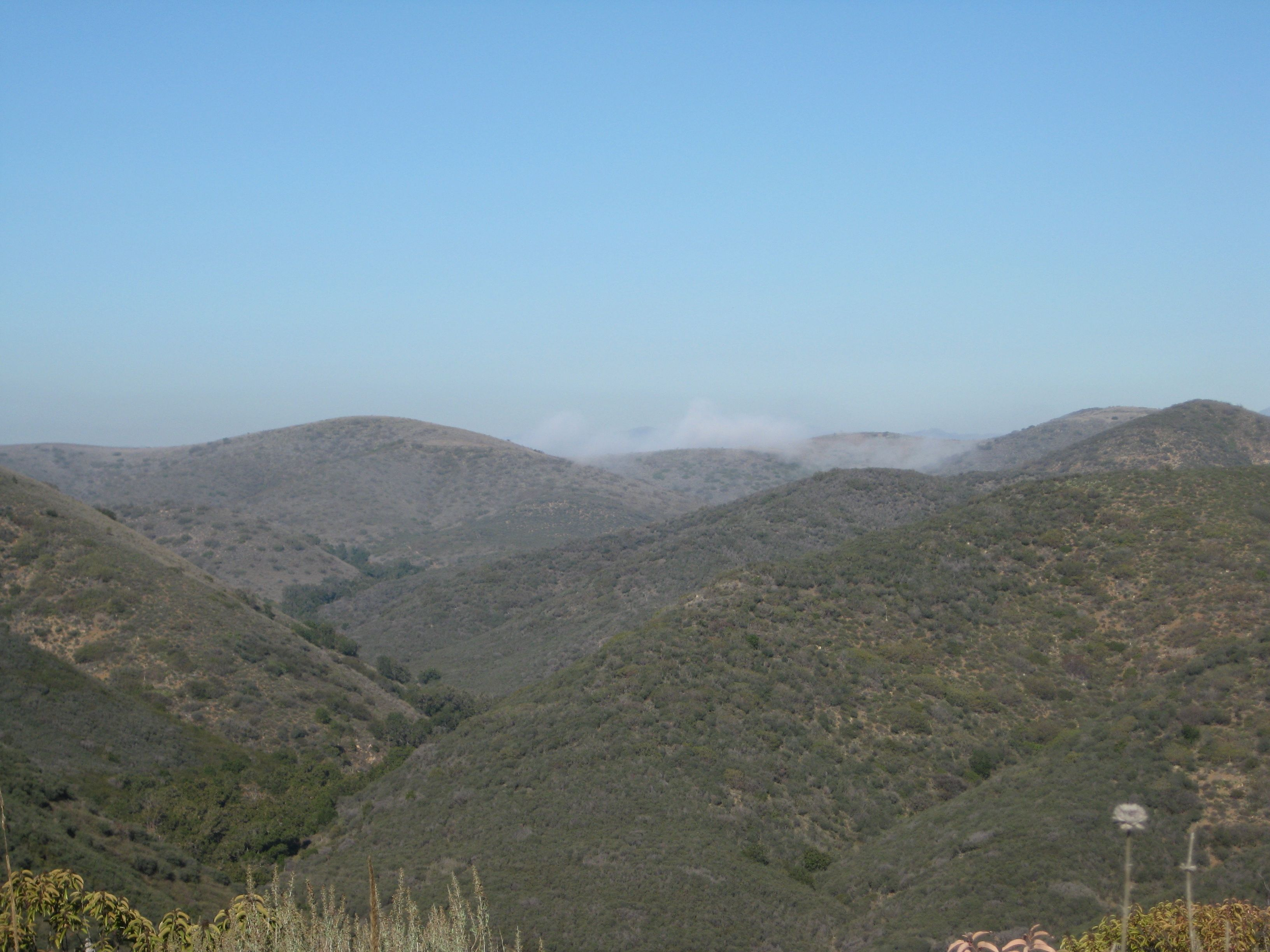 fogbits