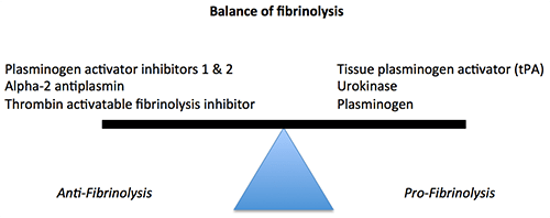 balanceoflysis2