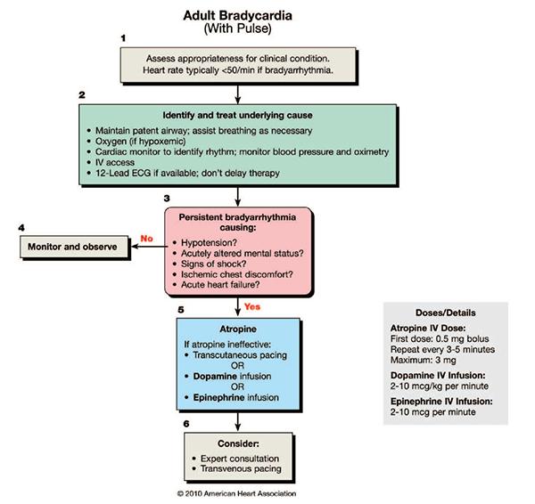 PulmCrit- Epinephrine vs  atropine for bradycardic periarrest