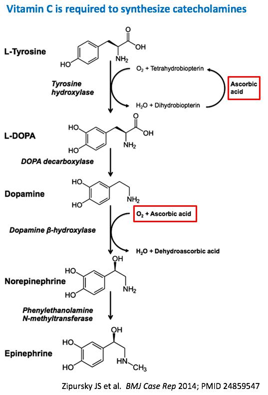 Pulmcrit Metabolic Sepsis Resuscitation The Evidence Behind