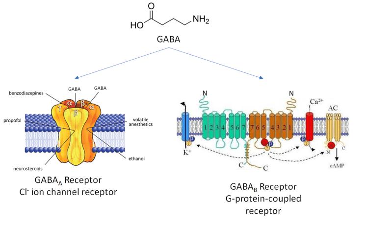 Figure 4. [https://commons.wikimedia.org/wiki/File:GABAa_receptor.gif] [https://commons.wikimedia.org/wiki/File:GABAB-receptor2.jpg]