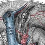 IVC Ultrasound for Non-Invasive Sepsis Protocol