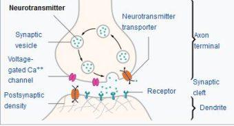 neurotransmitters and receptors