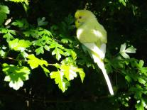 perruches-plumes-voliere-verte-nature