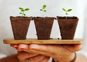 Three small saplings being offered on a platter.