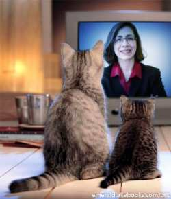 Two cats news - Cheryl Marks Young
