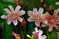 Vince Ferguson - Orange Flower 03 - Digital Image