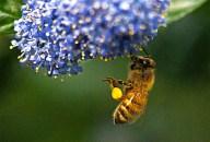 Vince Ferguson - Bumblebee Hanging - Digital Image