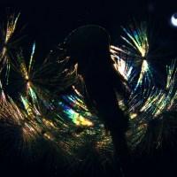 Night Dandelion II ©