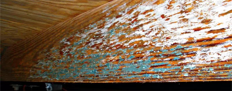 Crawlspace Mold Needs Remediation