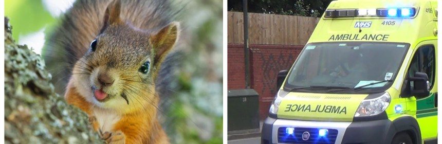 Bitten By A Squirrel? Don't Call 999! | Emergency Services News