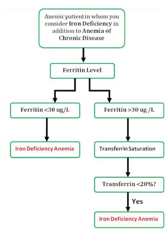 Anemia Polycythemia Amp Wbc Disorders Crashing Patient