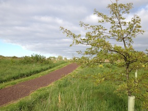 Today, a path leads visitors through the trees volunteers planted in 2006 to help restore the historic treeline.