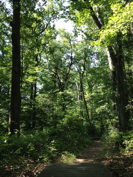 Trail01-sm