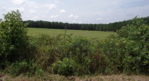 View from the Union position north of Depot Road (presently Reams Drive)