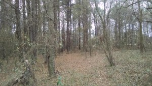 Mower's division advanced across this ground toward the Confederate line beyond.