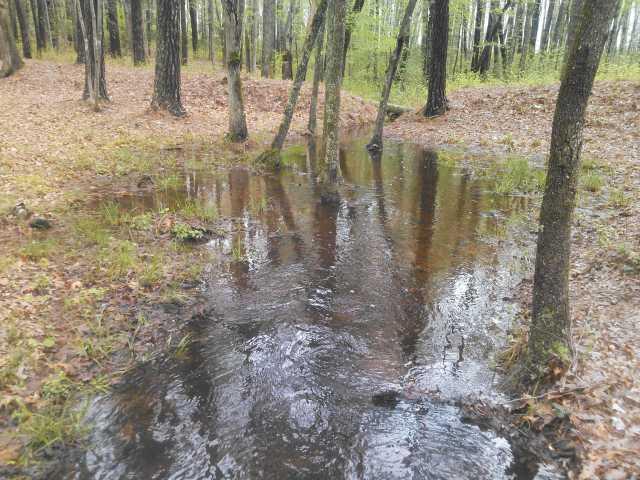 Arthur's Swamp