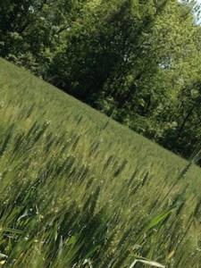 Henegan's Redoubt-Barley-Angle-sm