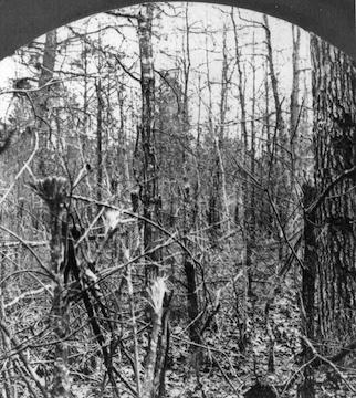 wilderness-woods