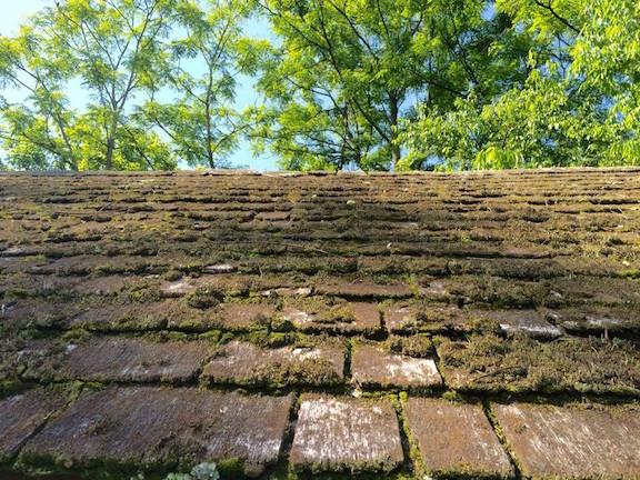 Lafleur Wilderness-mossy roof