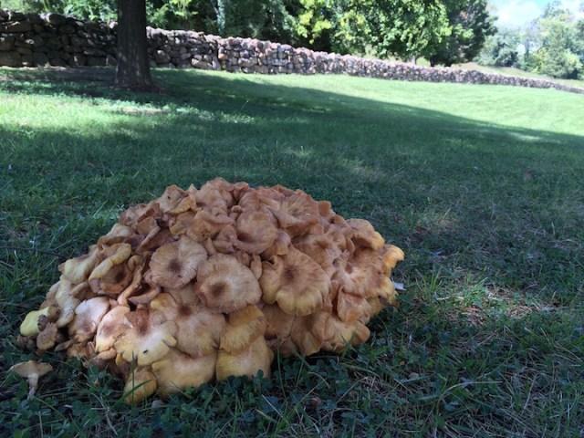Brain fungus