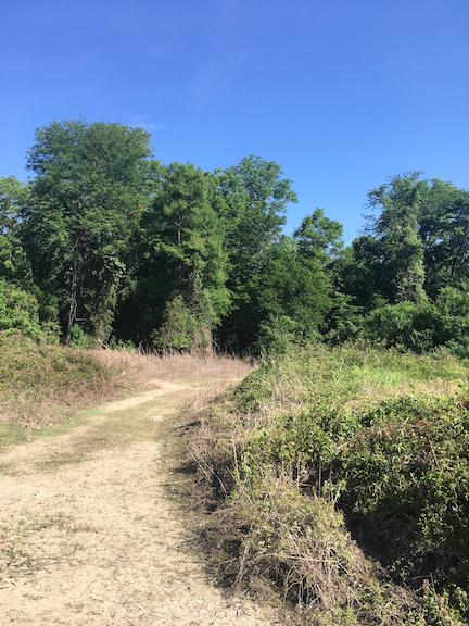 Bruinsburg Landing Site