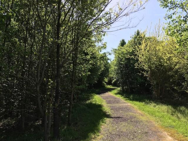 Day One Path through Wilderness