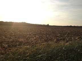 SP Farm