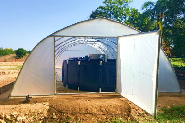 New Generation Emerging Farmers Hobby Tunnel with aqua-ponds
