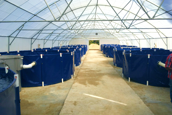 commercial freshwater fish farming, production units, 10mx40m tunnel, own business