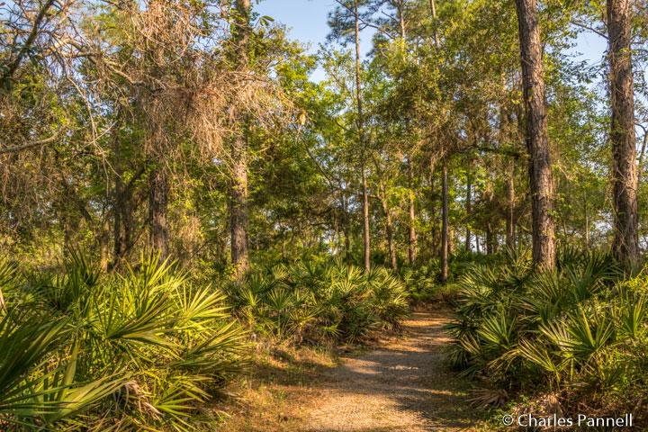 The Jeffery Friend Trail at Bon Secour National Wildlife Refuge