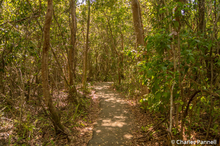 Gumbo Limbo trail in Everglades National Park