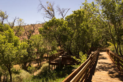The boardwalk to the Calico Basin meadow at Red Spring