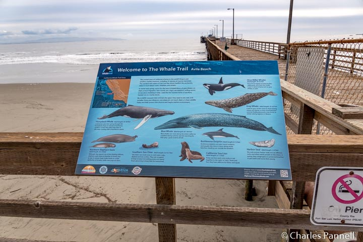 Whale Trail sign on the Avila Pier