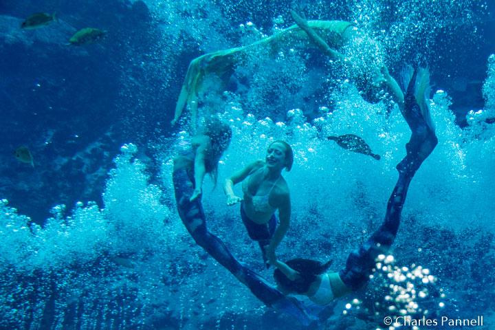 The Mermaid show at Weeki Watchee State Park