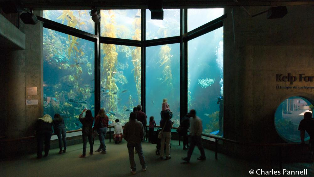 The Kelp Forest at Monterey Bay Aquarium