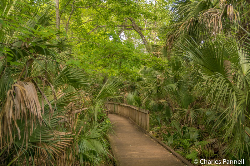 The Wet to Dry trail at Wekiwa Springs