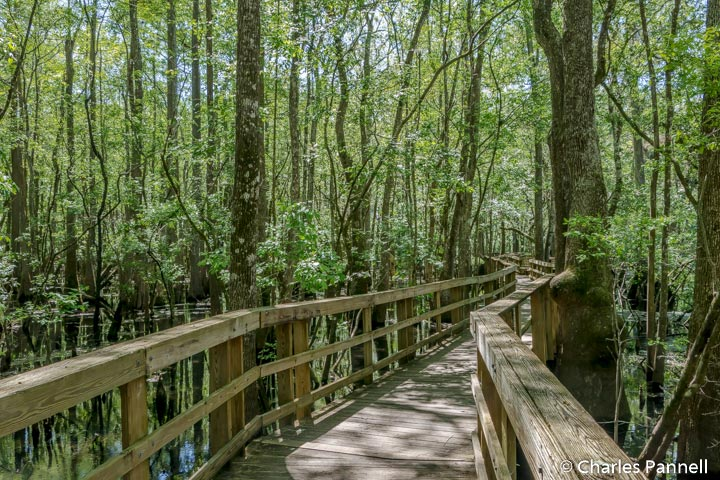 Manatee Springs boardwalk