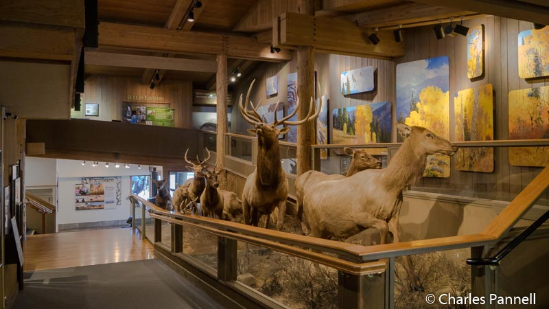 Exhibits in the Jackson Hole & Greater Yellowstone Visitor Center in Jackson, Wyoming