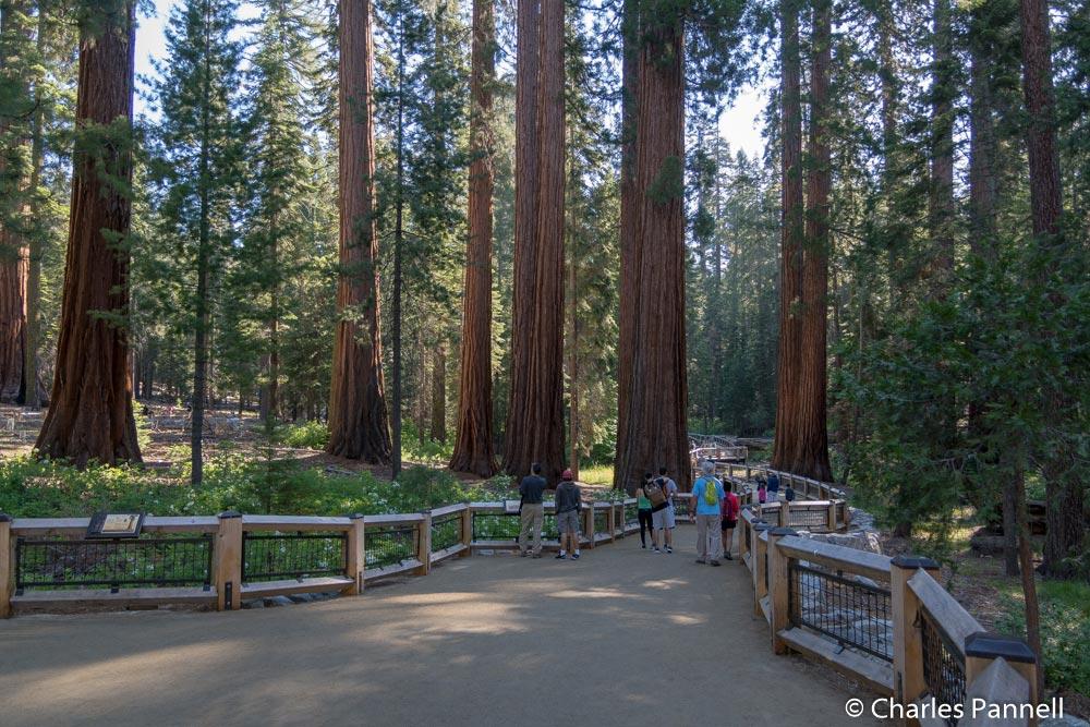 Mariposa Grove in Yosemite National Park