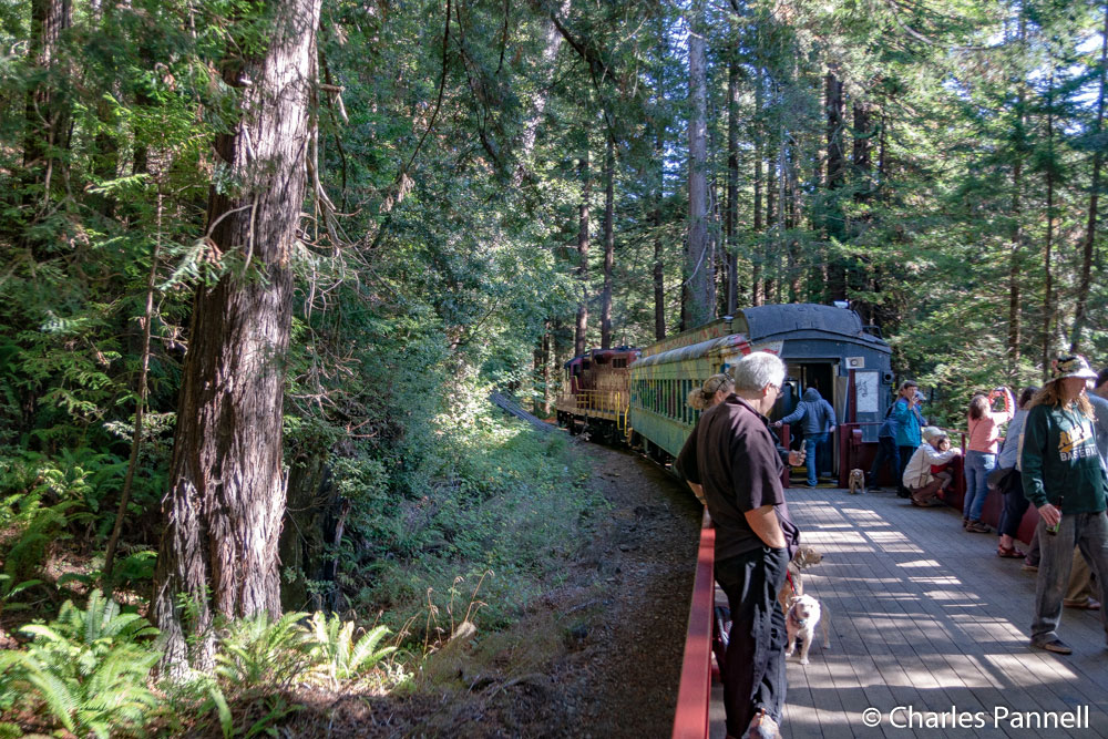 The Skunk Train rolling through a redwood forest