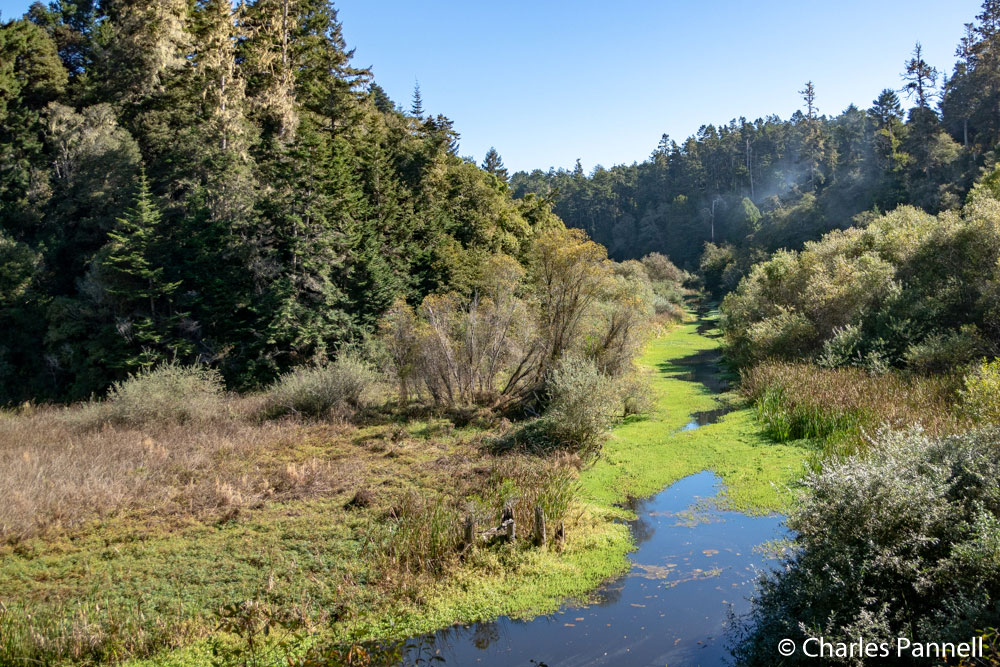 Pudding Creek viewed from the Skunk Train