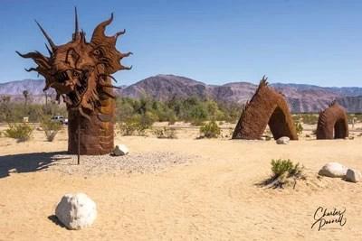 Treasures in the Desert