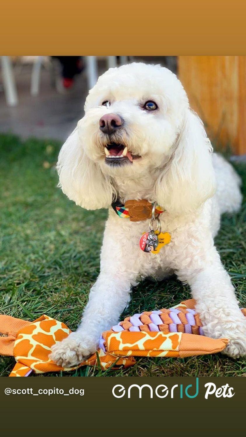 scott_copito_dog pet id nameplate NFC Emerid pets
