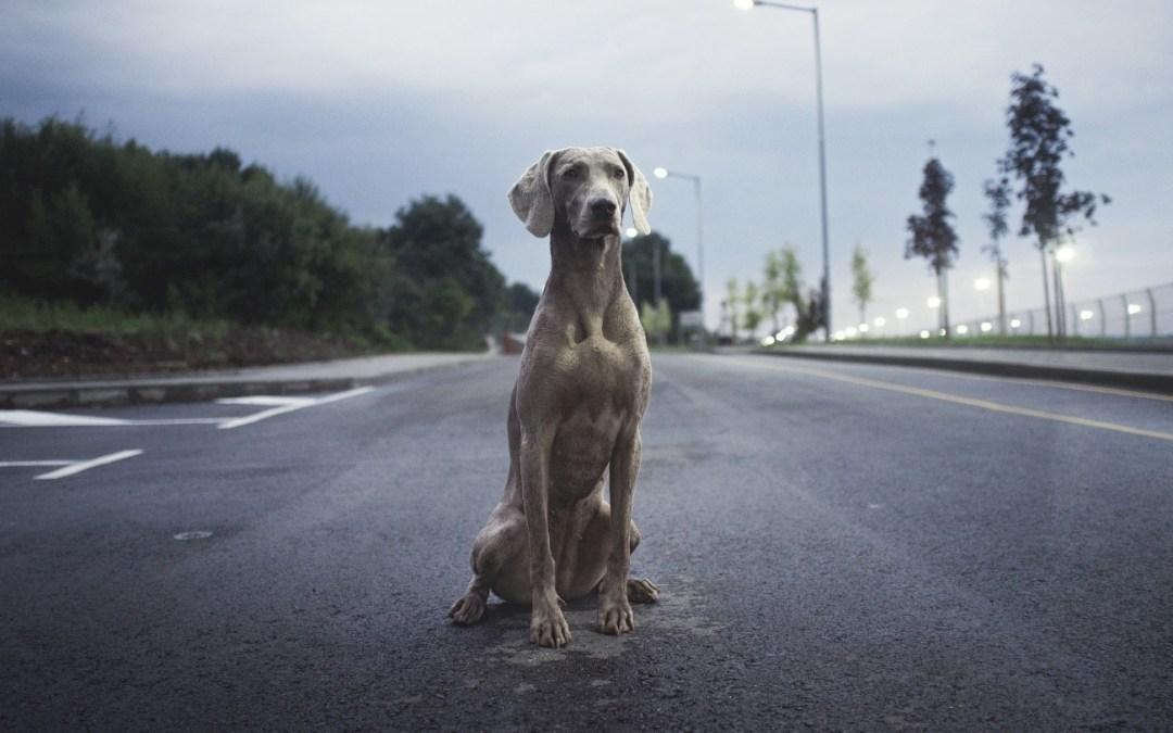 Ser propietario de una mascota implica una responsabilidad diaria