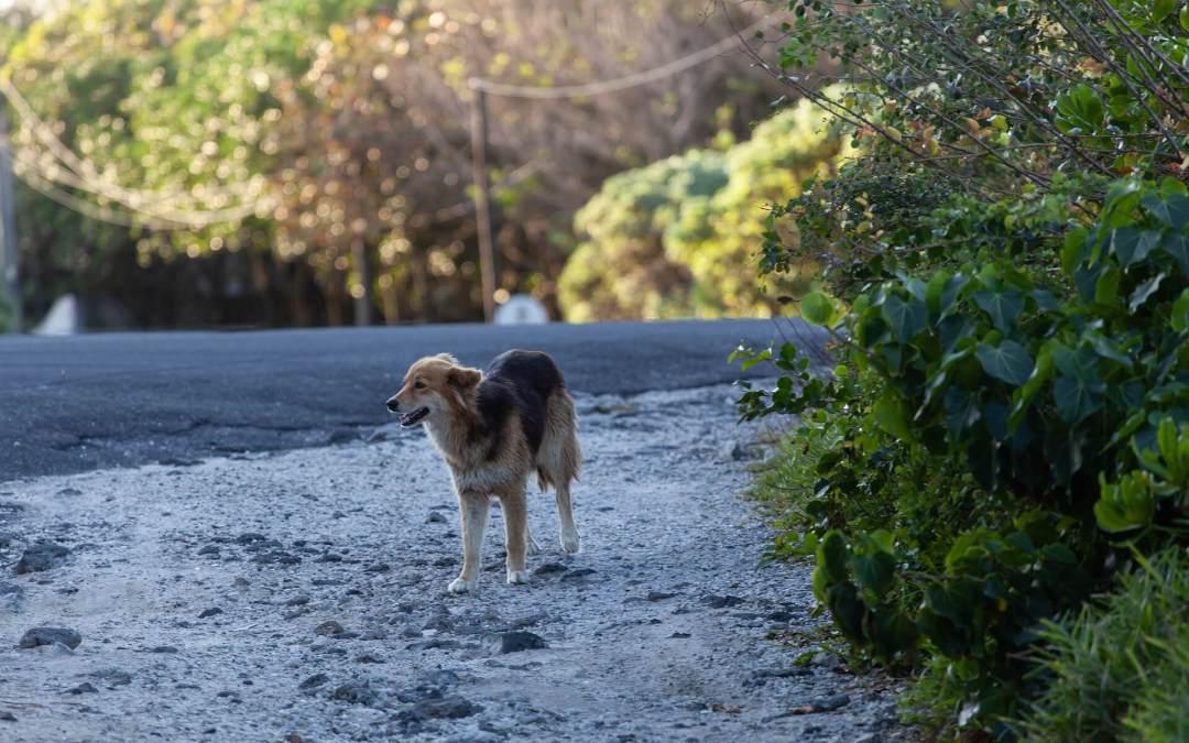 ¿Qué hacer si encuentras un perro abandonado o perdido?