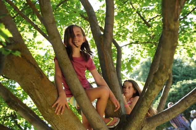 Climbing trees at the Emerson-Garfield Farmers' Market.