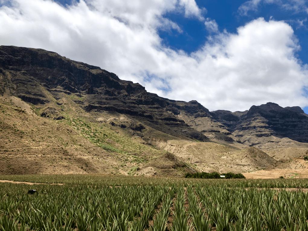 Emigreren Gran Canaria - 10 x (bijna) gratis activiteiten op Gran Canaria - Bezoek een aloe vera plantage - Aloe vera plantage in Fataga