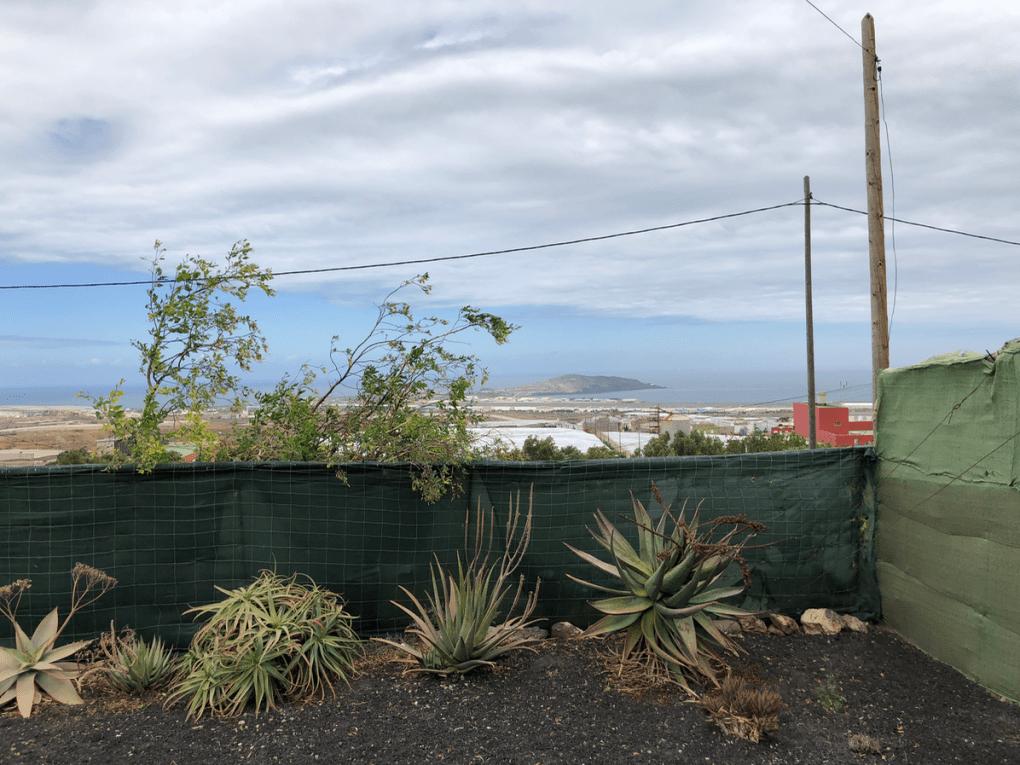 Excursie tips - Bezoek een Aloe vera plantage op Gran Canaria (GRATIS) - Aloe vera plantage Ingenio - Verschillende Aloe planten